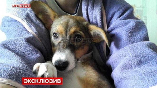 В Набережных Челнах ветеринары решают проблему щенка-гермафродита