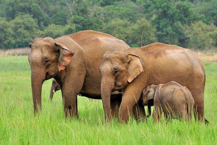 Слоны оказались самыми заботливыми и чуткими животными