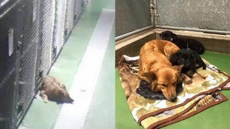 В приюте собака сбежала из клетки, услышав плач щенков