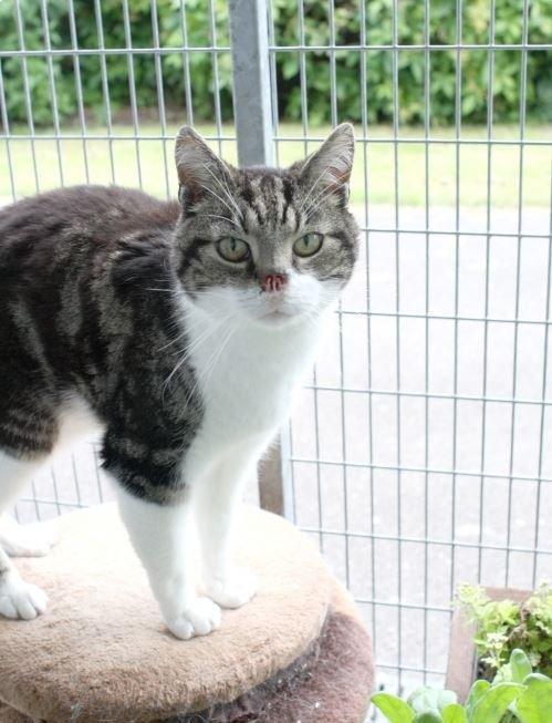 В Великобритании безносый кот нашел хозяина