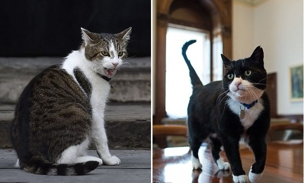 Кот министр
