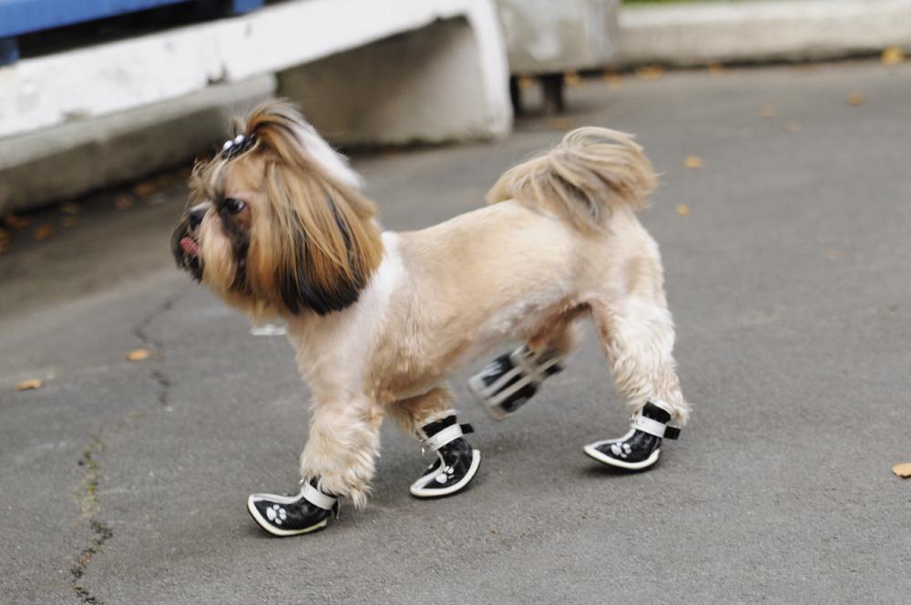 Обувь для собак от грязи и дождя