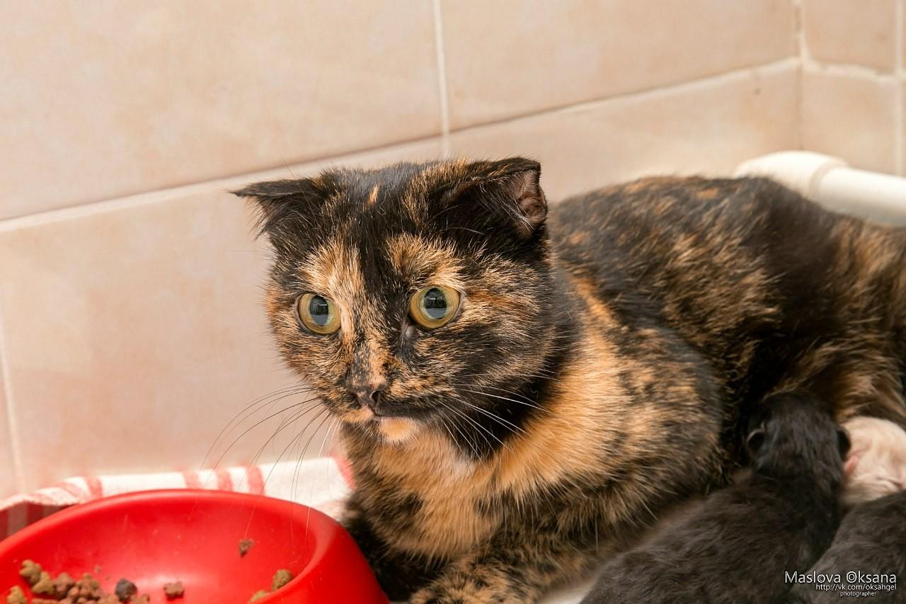 Картинки по запросу беременная кошка сама пришла рожать в самый настоящий роддом
