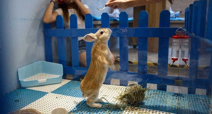 В Гонконге открылось кафе с кроликами