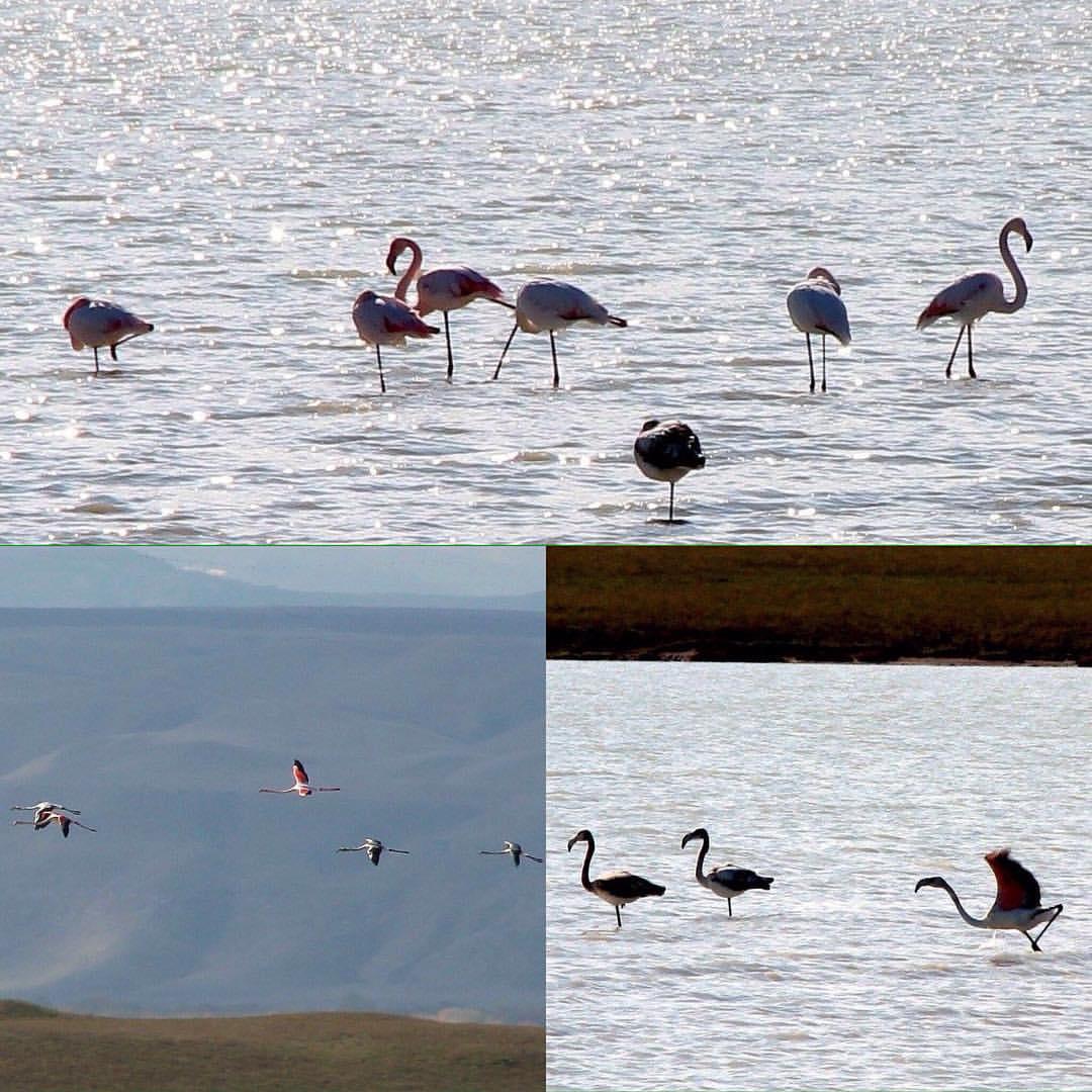 озеро в дагестане рыбалка