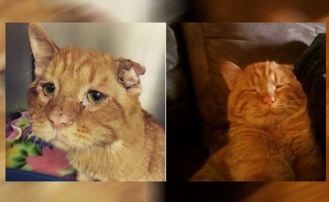 Картинки по запросу Самый грустный кот» преобразился всего через час после того, как ему нашли новый дом