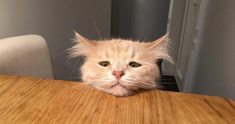 Кот Пончик, фото фотография кошки
