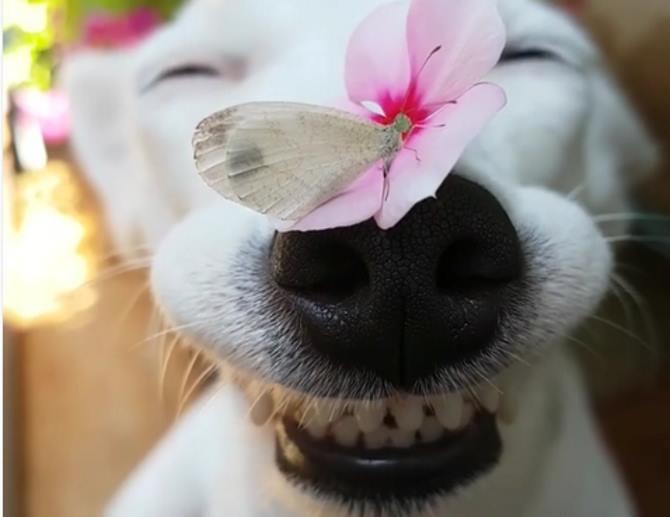Картинки по запросу улыбчивая собака сбабочкой на носу