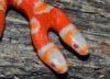 Во Флориде родилась двухголовая змея-альбинос