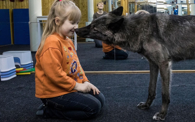 Фото волка с волчицей 4