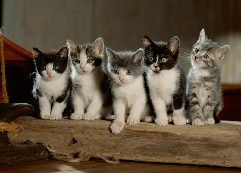 как кошки распознают знакомых