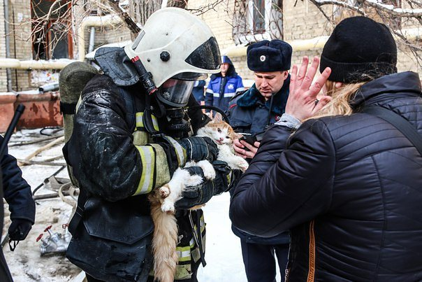 Волгоградские пожарные реанимировали надышавшегося гарью кота