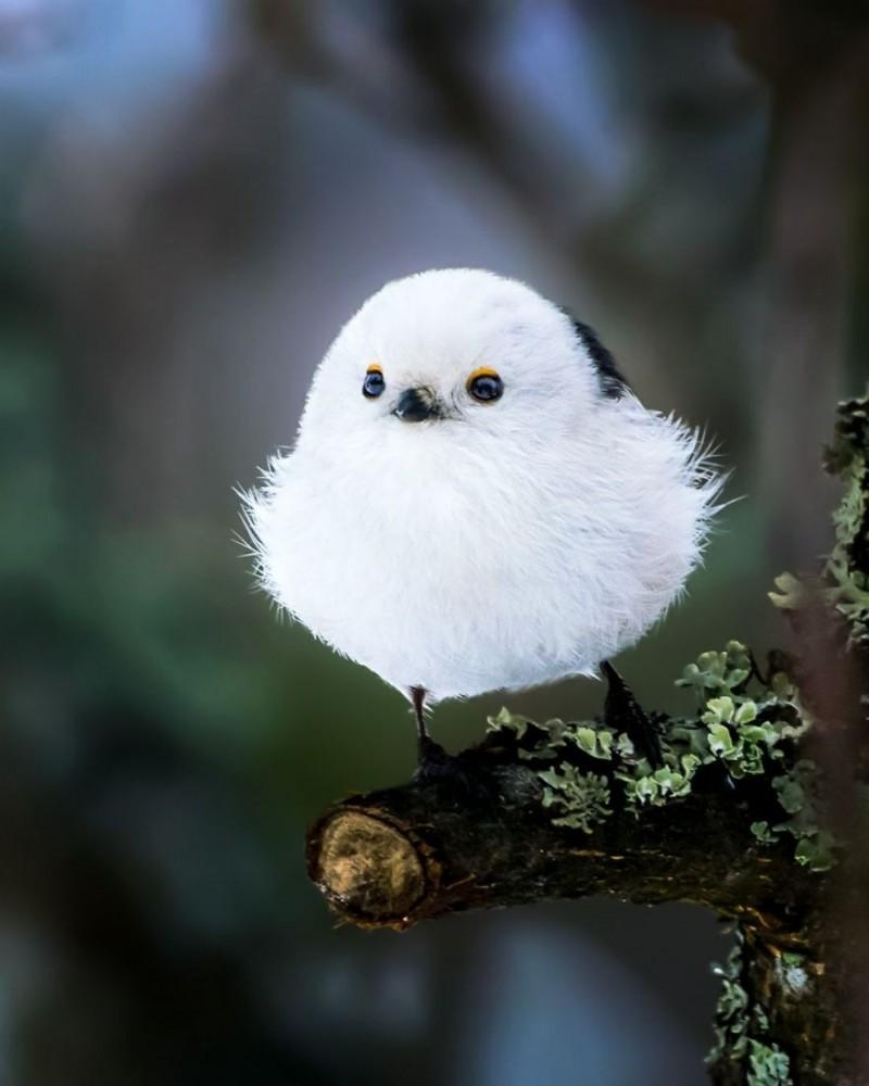Самые круглые птички от финского фотографа