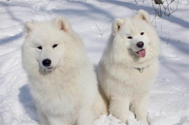 название породы собаки с мягким знаком