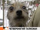 Московский дракон - самая популярная в столице порода собак