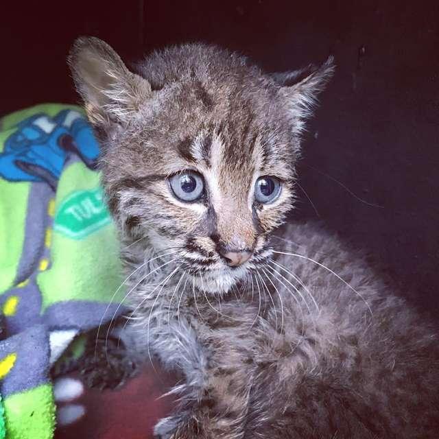 Американка нашла на дороге необычного котенка и принесла к себе домой