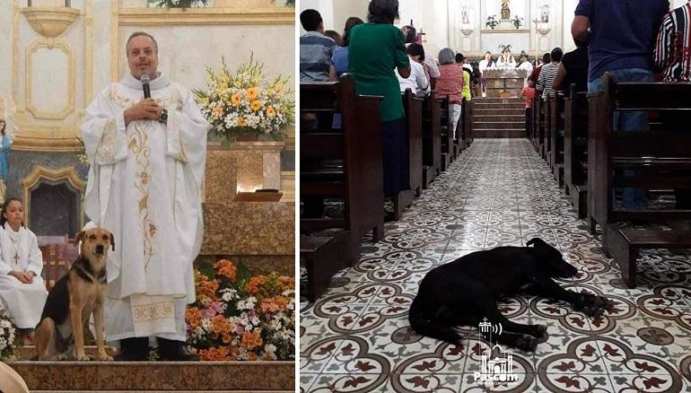 Бразильский священник впускает в церковь уличных собак, чтобы найти им новые семьи