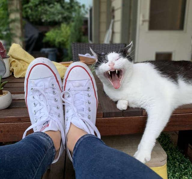 Крайне настойчивый кот преследовал девушку несколько дней и пытался проникнуть в ее дом