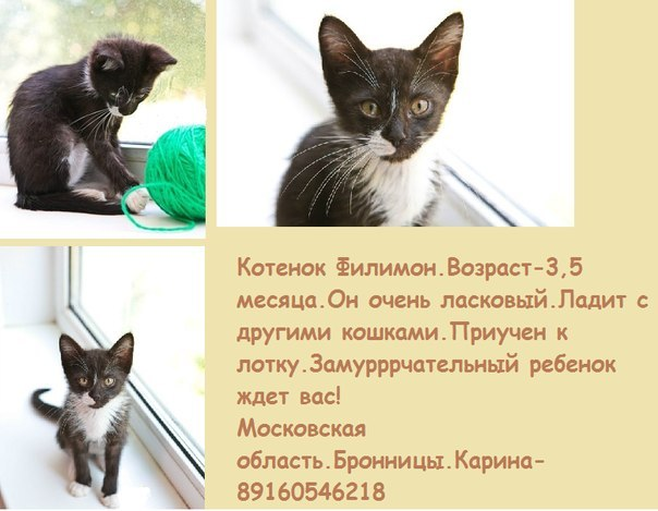 http://goodnewsanimal.ru/images/676766/KY8MexWkqRw.jpg